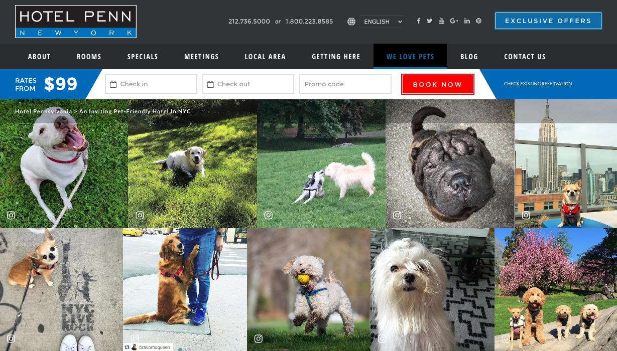Hotel-Penn-Pet-Friendly-Website-Page