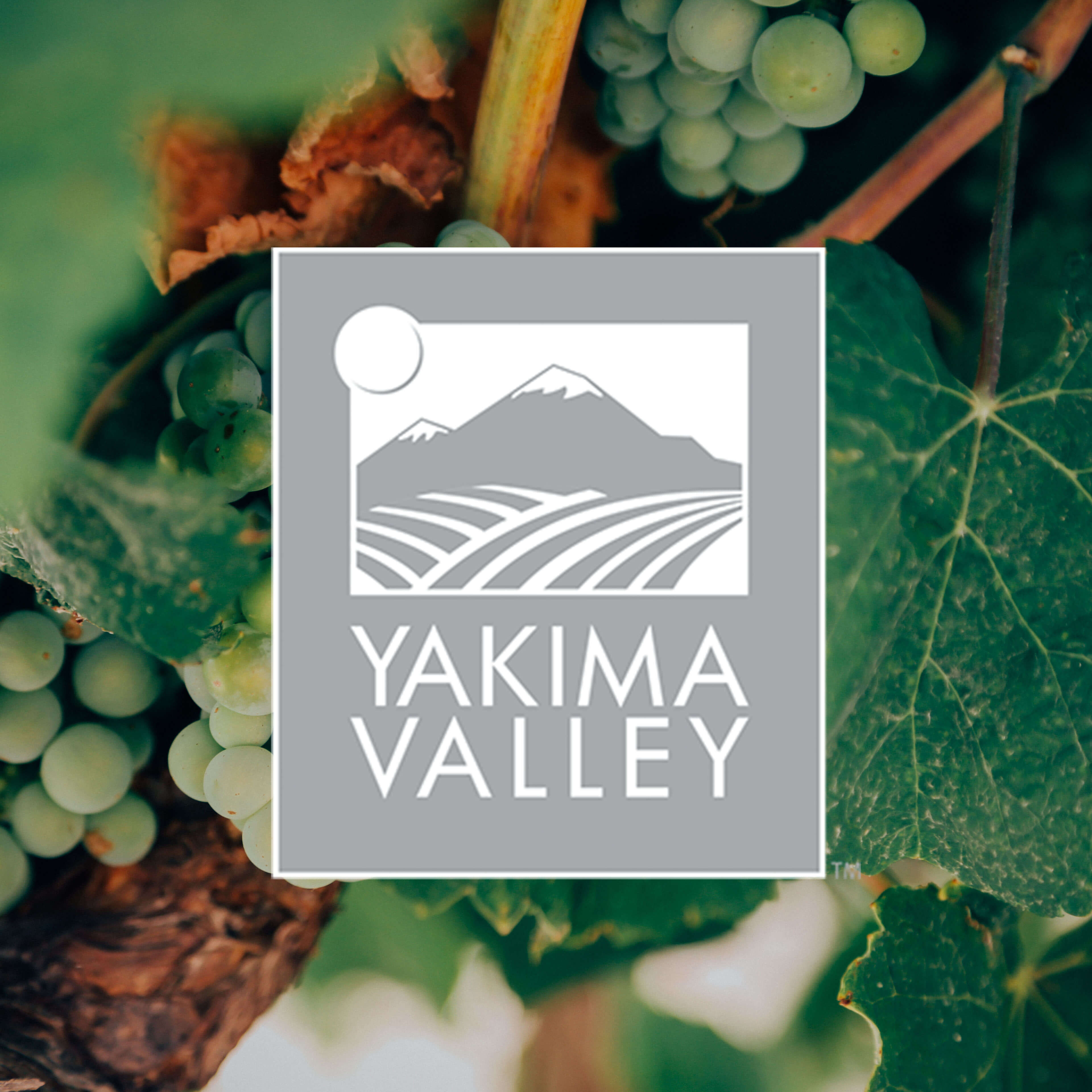 Close up shot of grapes in vineyard in Yakima valley with logo over top