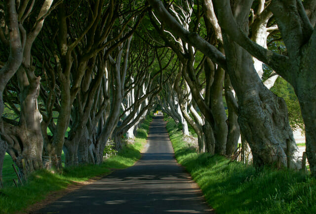 Tourism Ireland Doors of Thrones Dark Hedges CrowdRiff